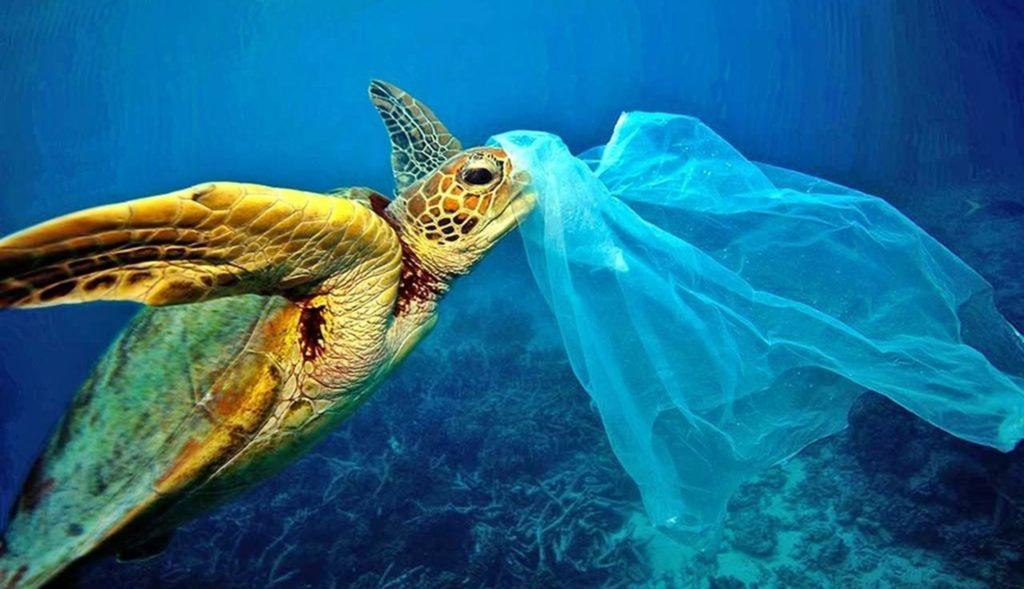 Tartaruga incagliata in un sacchetto di plastica