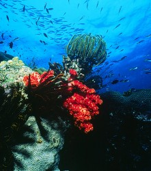 Barriera corallina bikini
