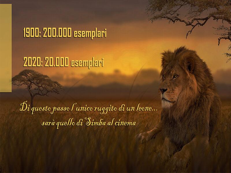 bisogna difendere gli animali in via d'estinzione: leoni